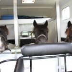 Horse Boxes for Sale in Worcester